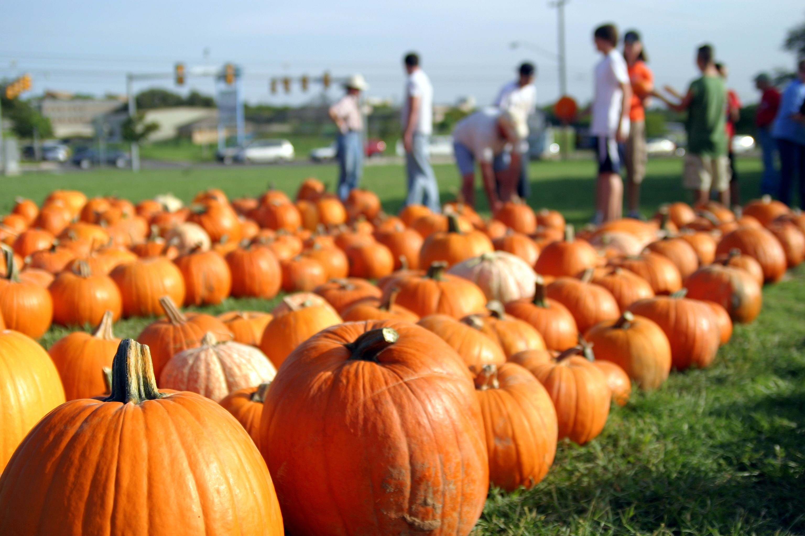 7 Fun And Affordable Fall Activities To Do This Weekend